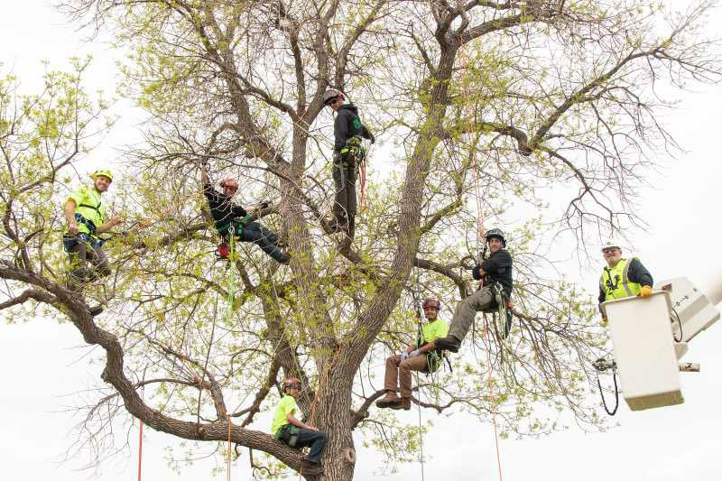 entire tree crew working to get tree removed in Casper, WY