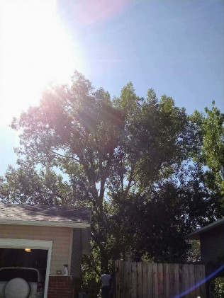 Cottonwood Before