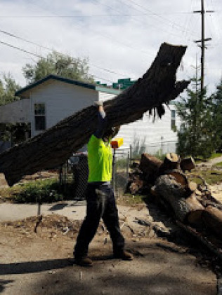 tree removal services in Casper, WY