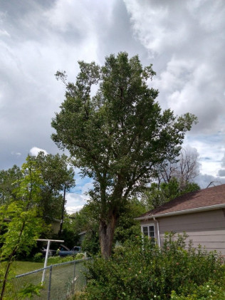 Casper, WY tree trimming services