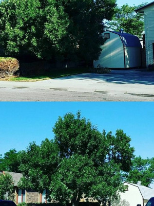tree trimming services in Casper, WY